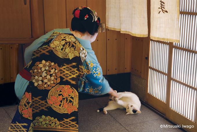 猫をかわいがる舞妓さんの姿