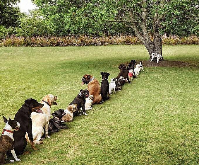 列を作り行儀よく順番を待つ犬たちの姿