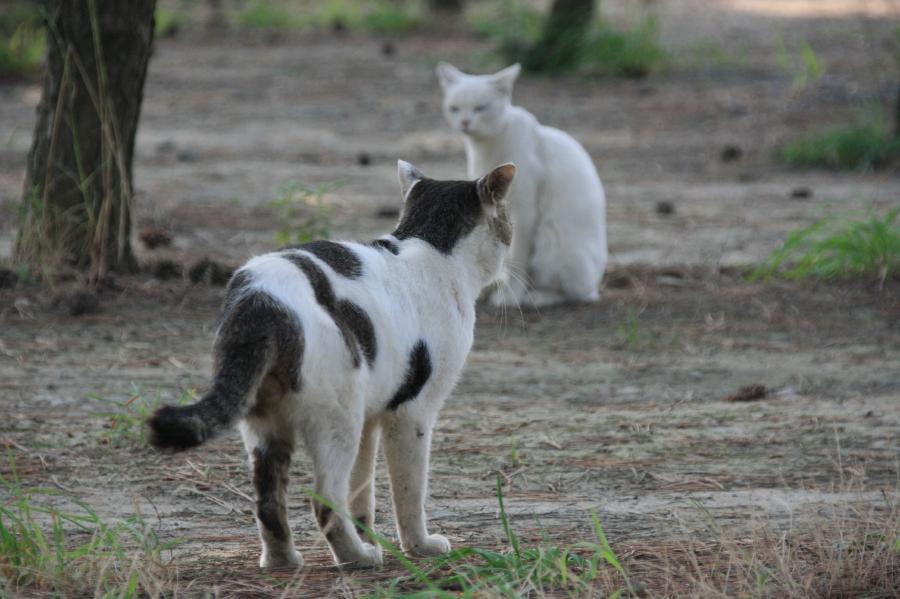 なわばりを守る猫の姿
