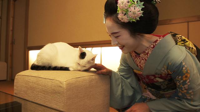 舞妓さんになぜられる猫の姿