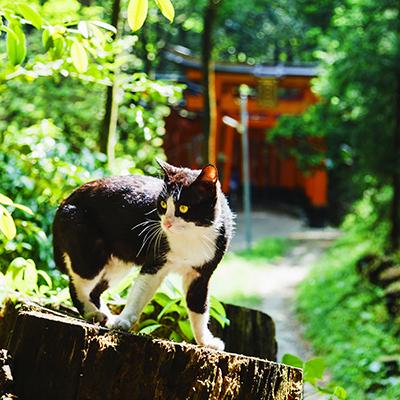 京都の野良猫の写真