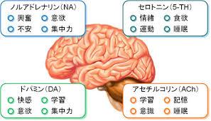 モノアミン系の神経伝達物質とその働きをまとめた図