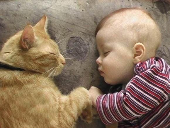 飼い主と寝るネコ