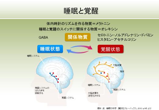 オレキシンをはじめとする脳内の睡眠 覚醒に関わる物質をまとめた図