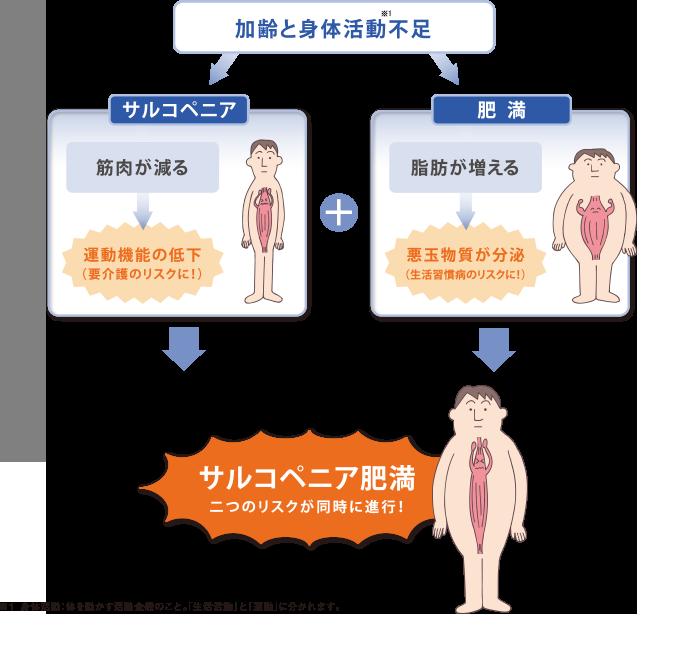 サルコペニア肥満の解説図
