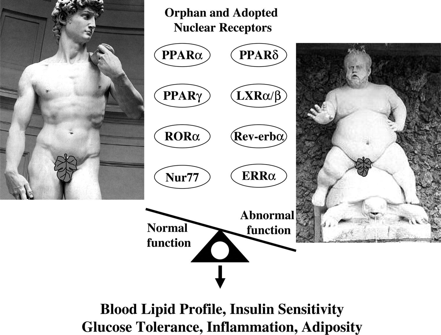 代謝産物 オーファン受容体と肥満の関連を示す図