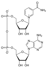 補酵素の構成成分であることを示す図