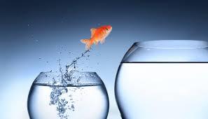 水槽から飛び出る金魚
