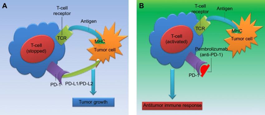 がん細胞とT細胞の相互さようについてまとめた図