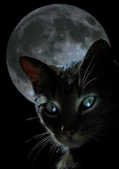 月をバックに睨むデイジー
