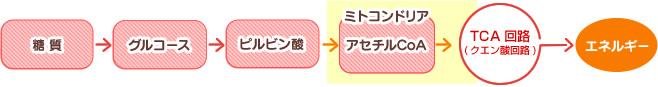 糖質からアセチルCoAができる過程の図示