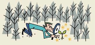 森の中で木だけ見ている人