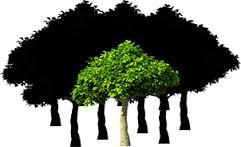 森全体の構図