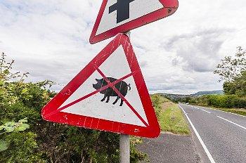 豚にバツ印が書かれたポスター