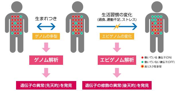 エピゲノム解析の説明図