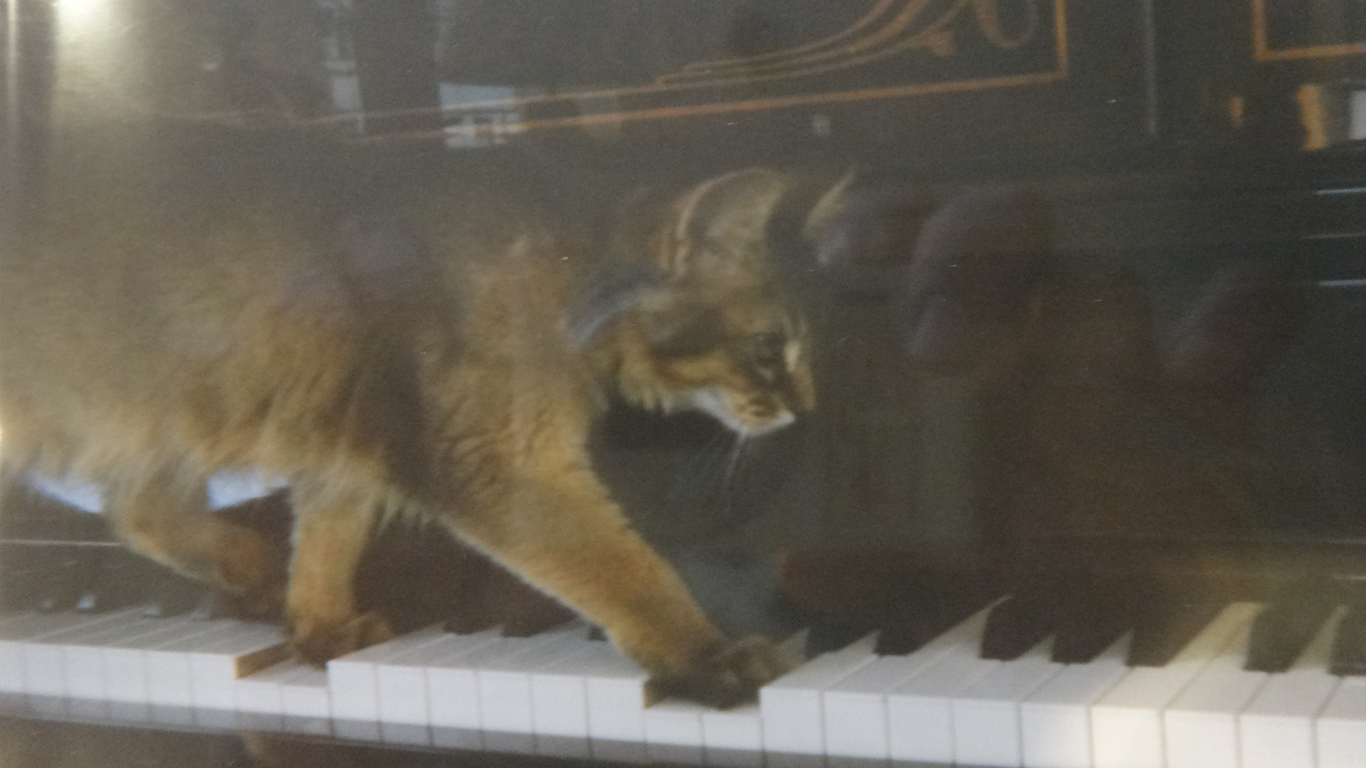 ピアノの鍵盤の上を歩く小さい頃のローズ