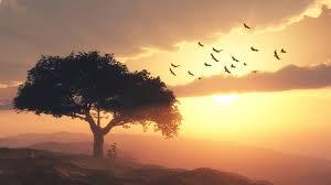 夕暮れのなかを木から飛び立つ鳥