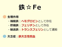 鉄 フェリチンの生理作用をまとめた表