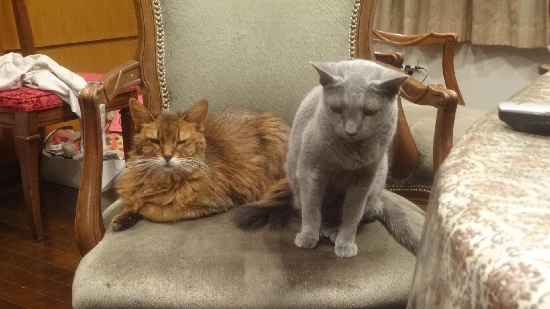 並んで椅子に座るローズとデイジー