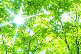 新緑の間を差し込む日射し