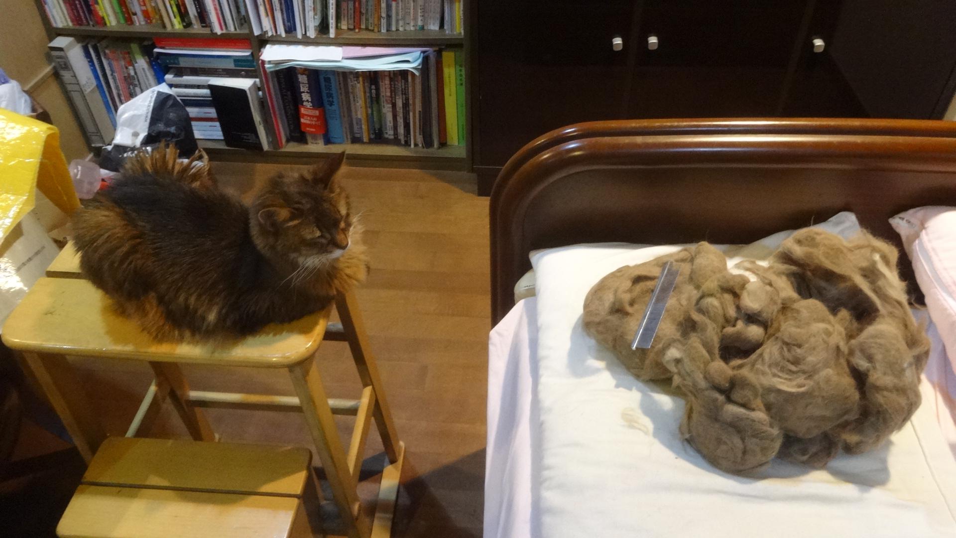 ローズと同じくらいの大きさの毛玉の塊