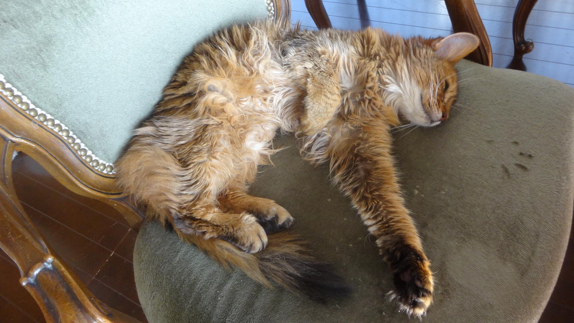 寝ながらヒゲをピクピクと震えるように動かすローズ