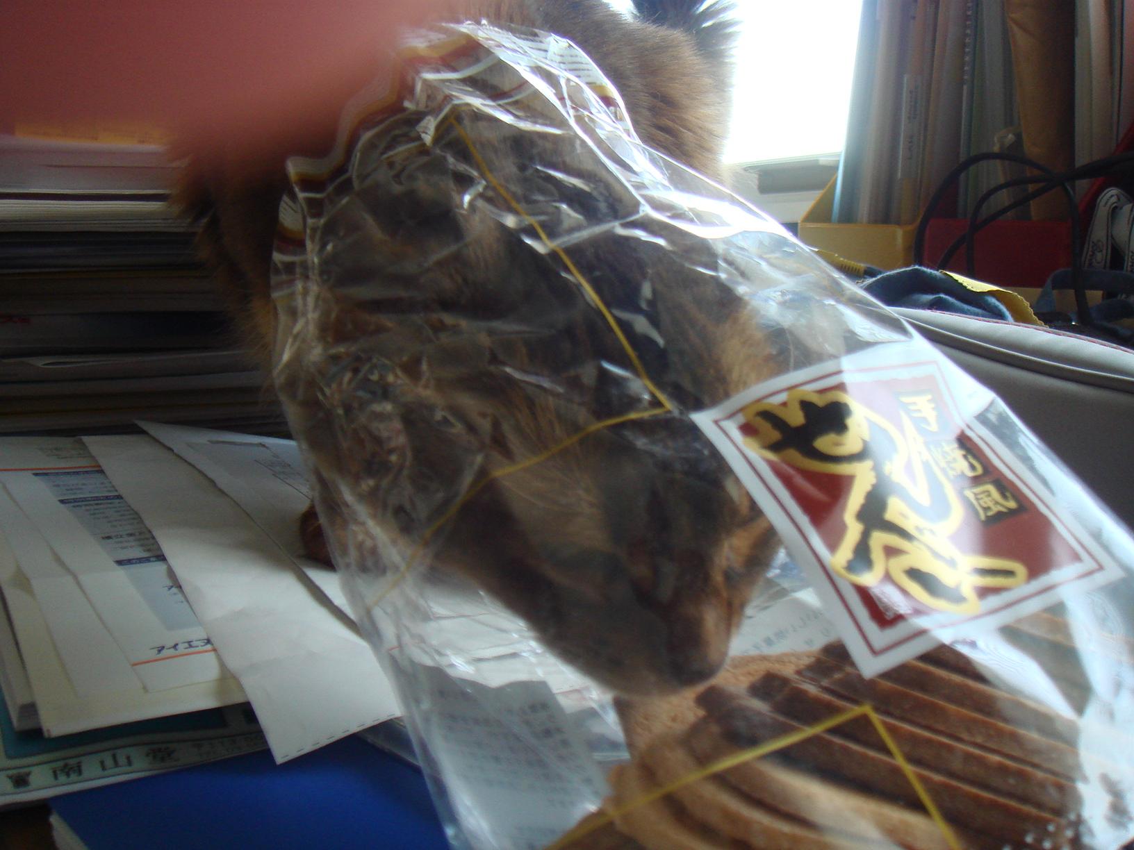 お菓子の袋に顔を突っ込むローズ