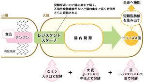 レジスタントスターチの作用機序の説明図