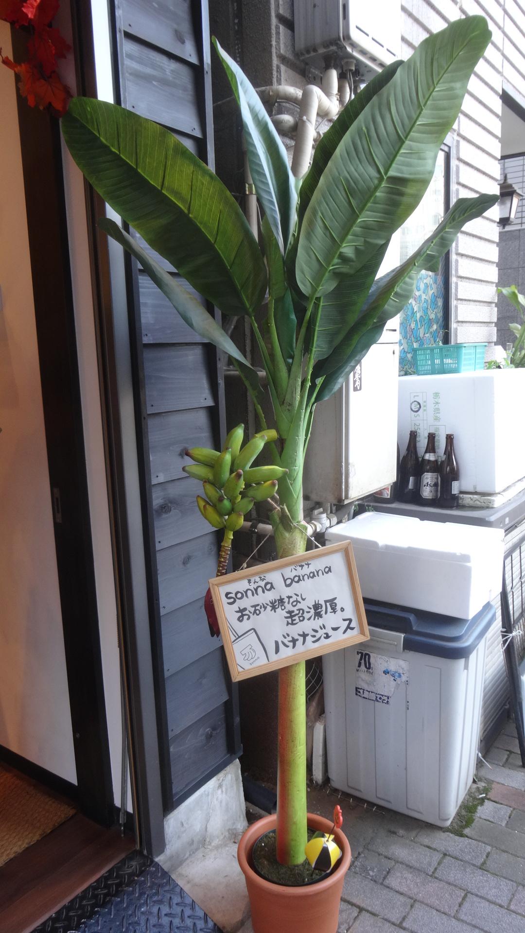 お店の前のバナナの木