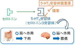 セロトニン受容体刺激薬 拮抗薬の作用機序を示した図