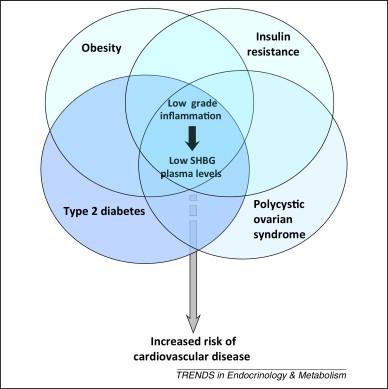 shbgの低下と心血管疾患発症との関連を示した図
