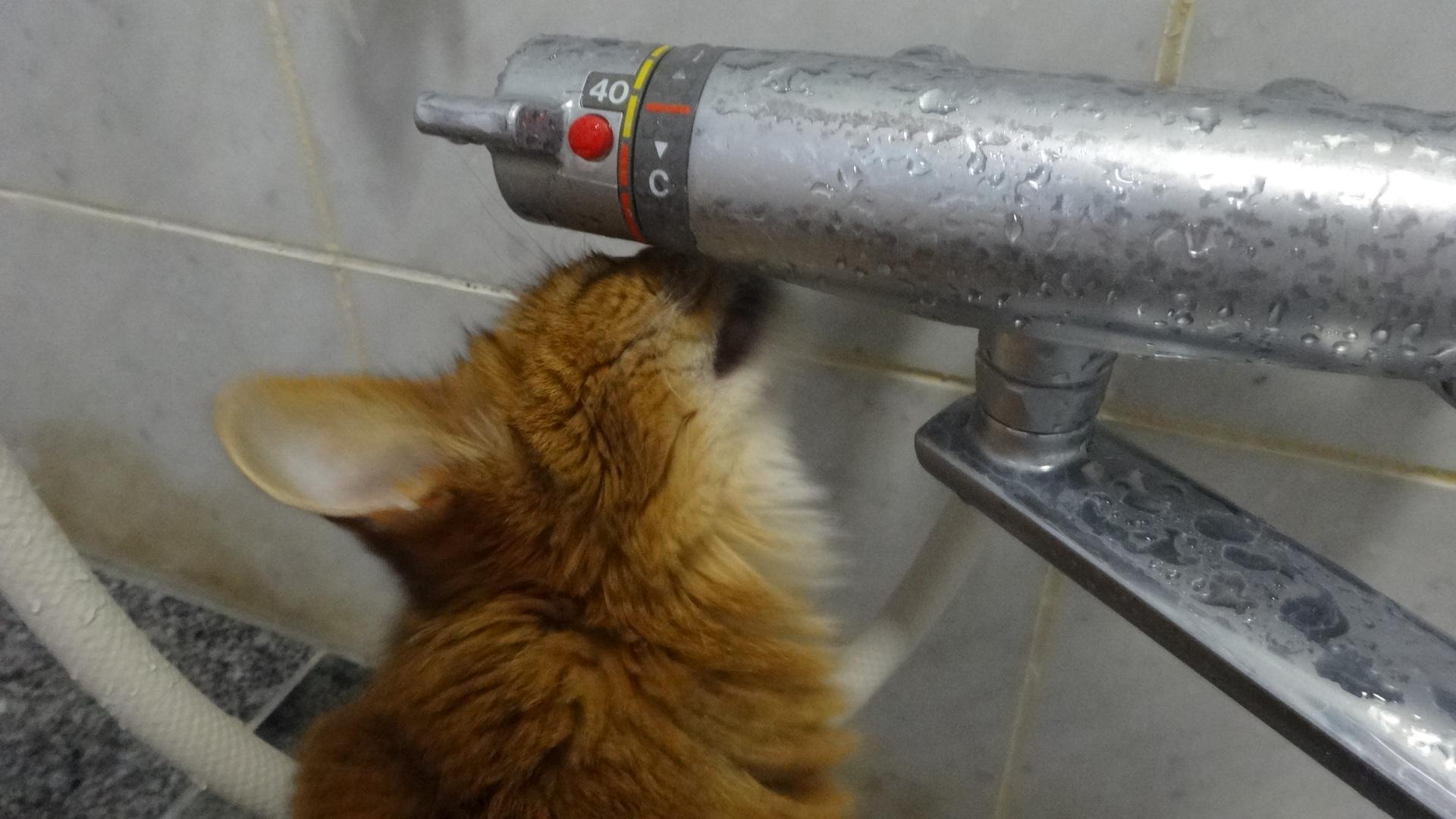 一心不乱に器具についた水滴を 音を立てて舐めるローズ