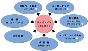 サーチュイン遺伝子の多種多様な機能をまとめた図