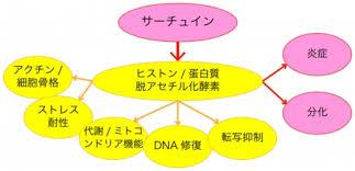 サーチュインタンパクがエピジェネテイック制御により老化 炎症 生活習慣病などを促進する遺伝子の発現を抑制することを示す図