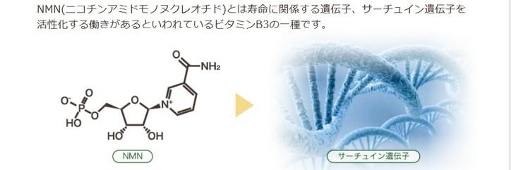 ビタミンB3の一種のNMNがサーチュイン活性を高めることを示す図