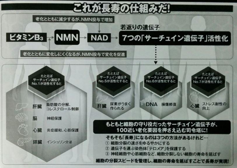NMNによるサーチュイン活性促進を示す図