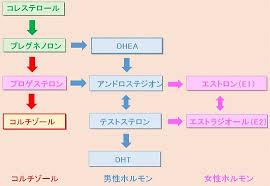 コレステロールから各種ホルモンが生成される過程を示す図