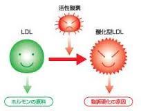 LDL-Cから酸化LDLができる過程を示した図