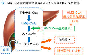 HMG-CoA還元酵素阻害薬の作用機序を示す図1