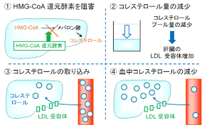 HMG-CoA還元酵素阻害薬の作用機序を示す図2