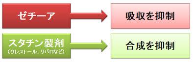 小腸コレステロールトランスポーター阻害剤とスタチンの併用効果を示す図