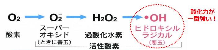 ヒドロキシルラジカルが最強の活性酸素であることを示す図