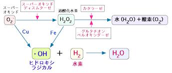 ヒドロキシルラジカルの産生過程を示す図