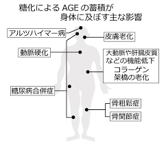 AGEが全身の組織に悪い影響を及ぼすことの説明図