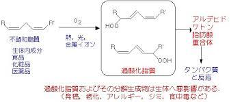 不飽和脂肪酸の脂質過酸化反応によりできたアルデヒドが核酸 タンパク質などを傷害することを示した図