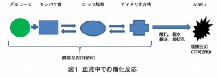 脂質の糖化により脂質過酸化反応が生じることを示す図