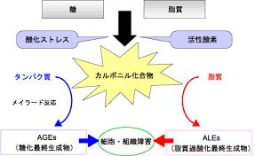 脂質の糖化により有害な酸化反応が誘導されることを示した図