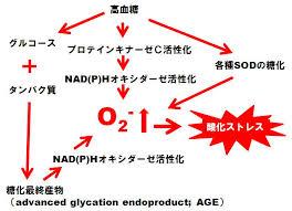 糖尿病で酸化ストレスが亢進している機序の説明図