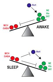 睡眠と覚醒がシーソーのような状態になっていてどちらかが優勢になるとスイッチが切り替わることを示す図
