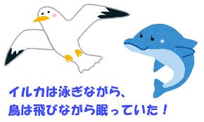 イルカは泳ぎながら寝ていることを示す図